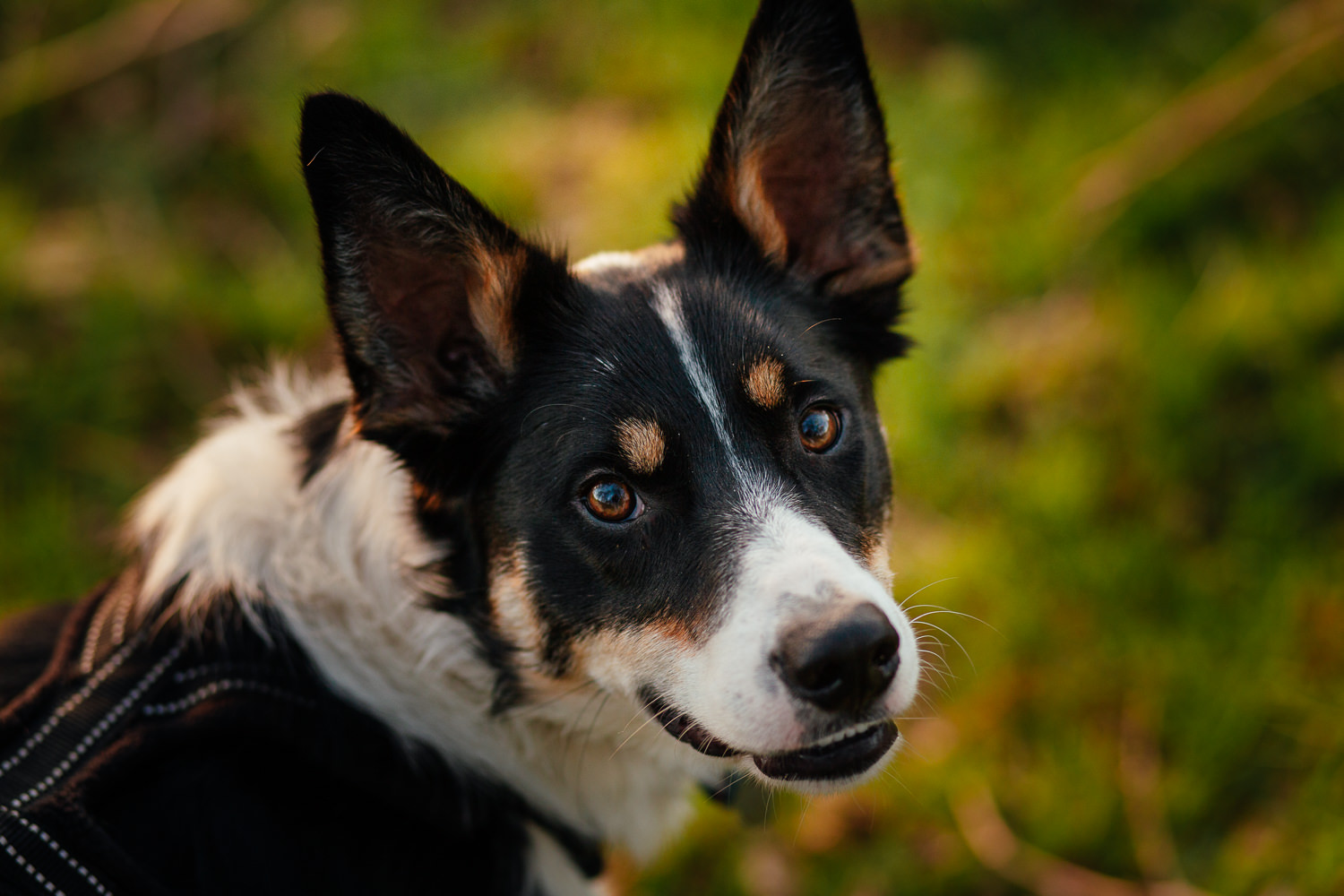 Couples Session Glasgow Carbeth Sunset Dog Collie